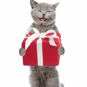 Cadeautjes voor de kat