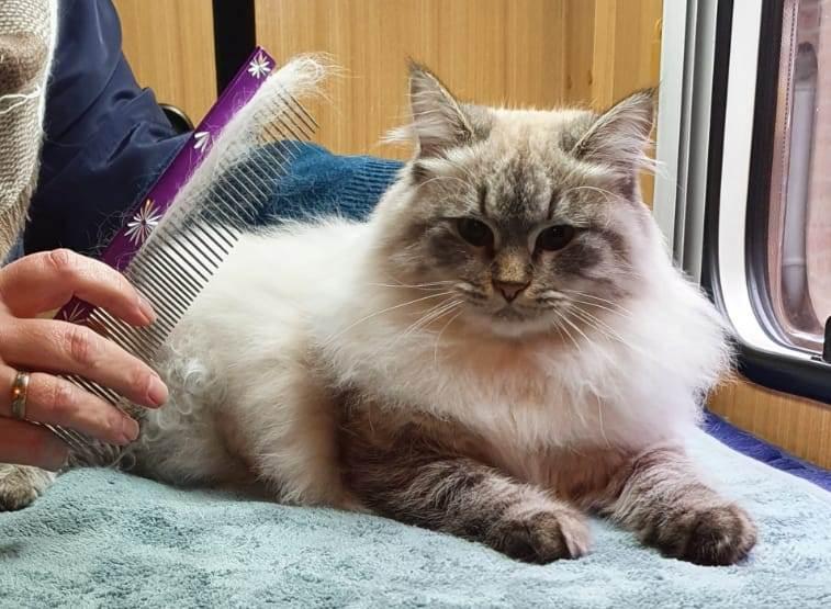 De Kattenvriendin, gediplomeerd Kat en Vacht vriendelijk Kattentrimster.