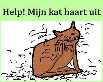 Help! Mijn kat haart uit.